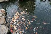 08彰化大佛&八卦山脈生態遊客中心:IMG_0373.JPG