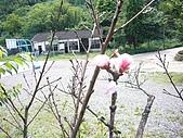 08向天湖、神仙谷、護魚步道、賽夏+:P1090974.JPG