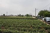 08受天宮、茶香步道:IMG_0293.JPG