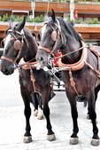 瑞士-策馬特:策馬特車站的馬車一.jpg