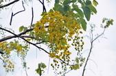 花蓮-富里:羅山植物一.jpg