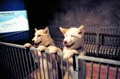 瑞士-少女峰車站:少女峰車站小犬.jpg