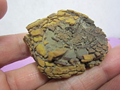 菠蘿鐵丸龜甲:IMG_3966