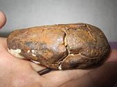 鐵丸龜甲:IMG_5494.JPG