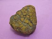 菠蘿鐵丸龜甲:IMG_4254.JPG