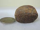 菠蘿鐵丸龜甲:IMG_2123.JPG