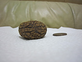 菠蘿鐵丸龜甲:IMG_2174.JPG