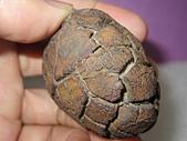 天然神龜:IMG_4112.JPG