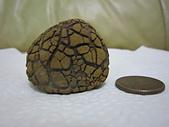 菠蘿鐵丸龜甲:IMG_2172.JPG