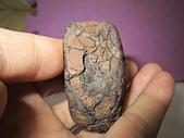 鐵丸龜甲:IMG_4095.JPG