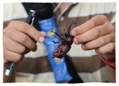 2014 小小胖&小妞妞趴趴走 II:導覽員抓一隻讓我們看看他的身體