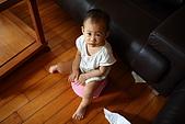 球球一歲六個月:很委屈地坐在小馬桶上不敢起來