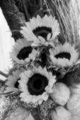 網誌用的圖片:1955796460.jpg