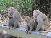 全家♥ 旅遊 - 南投旅遊:彌猴媽媽帶寶寶們