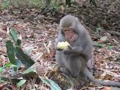 全家♥ 旅遊 - 南投旅遊:彌猴吃玉米
