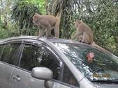 全家♥ 旅遊 - 南投旅遊:彌猴亂爬車