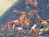 全家♥ 旅遊 - 南投旅遊:好多漂亮的魚