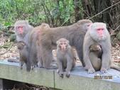 全家♥ 旅遊 - 南投旅遊:松柏嶺賞彌猴