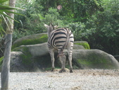 2011年11月中(台北之旅編)隨意拍:2011.11.12 a台北木冊動物園  (1).JPG