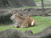 2011年11月中(台北之旅編)隨意拍:2011.11.12 a台北木冊動物園  (4).JPG