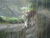 2011年11月中(台北之旅編)隨意拍:2011.11.12 a台北木冊動物園  (6).JPG