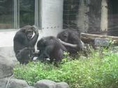 2011年11月中(台北之旅編)隨意拍:2011.11.12 a台北木冊動物園  (8).JPG