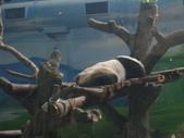 2011年11月中(台北之旅編)隨意拍:2011.11.12 a台北木冊動物園  (17).JPG