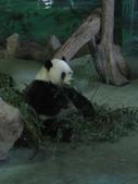 2011年11月中(台北之旅編)隨意拍:2011.11.12 a台北木冊動物園  (18).JPG