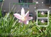 花花:flower27.jpg