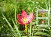 花花:flower28.jpg