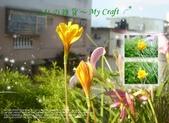花花:flower30.jpg