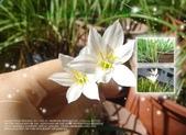 花花:flower31.jpg