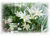 花花:flower32.jpg