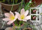 花花:flower33.jpg