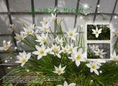 花花:flower35.jpg