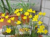 花花:flower36.jpg