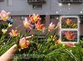 花花:flower37.jpg