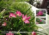 花花:flower39.jpg