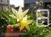 花花:flower41.jpg