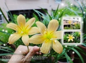 花花:flower42.jpg