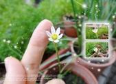 花花:flower38.jpg