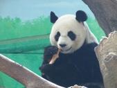 2014.11.29 台北動物園:動物園 (14).jpg