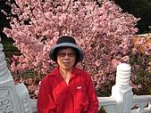 2015.3.18 天元宮櫻花怒放 - 今年特茂密、特美:天元宮 (16).jpg