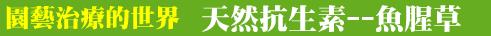 園藝治療的世界-0004魚腥草.png - ◆園藝治療世界-結業