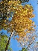 尖石鄉、秀巒村、青蛙石、薰衣草森林:秀巒楓樹林_153.JPG