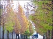 好友聚餐、歡唱、友人贈花、賞花:石園路落羽松_68.jpg