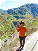 尖石鄉、秀巒村、青蛙石、薰衣草森林:秀巒楓樹林_15.jpg