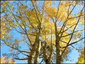 尖石鄉、秀巒村、青蛙石、薰衣草森林:秀巒楓樹林_130.jpg