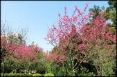 立法院、台北賓館、自由廣場、中正紀念堂:中正紀念堂櫻花-1_67.jpg