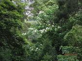 鄭漢步道、龍昇湖、將軍牛乳廠、頭屋三窪坑步道:頭屋三窪坑步道 063